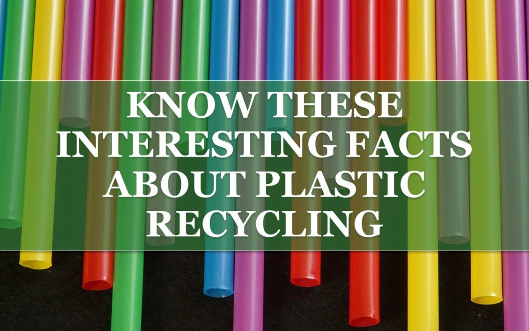 6 Interesting Facts about Plastic Recycling That May Surprise You